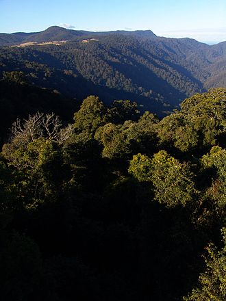 Dorrigo Plateau - The plateau drops into steep valleys in the Dorrigo National Park.