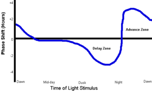 "Phase response curve - The time shown on the x-axis is vague: dawn – mid-day – dusk – night – dawn. These times do not refer to actual sun-up etc. nor to specific clock times. Each individual has her/his own circadian ""clock"" and chronotype, and dawn in the illustration refers to a person's time of spontaneous awakening when well-rested and sleeping regularly. The PRC shows when a stimulus, in this case light to the eyes, will effect a change, an advance or a delay. The curve's highest point coincides with the subject's lowest body temperature."