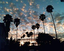 Widok na park widok słońca