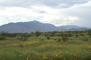 Rincon Mountains - Image: Rincons From Mescal Rd