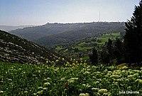 Spring in northern Jordan.