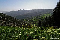 Spring in northern Jordan.