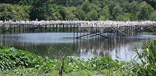 Avery Island bird sanctuary