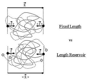 Ideal chain fixed reservoir corrected2.JPG