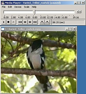 Windows Media Player - Media Player 5