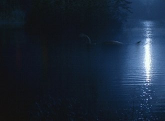 """Quagmire (The X-Files) - """"Big Blue"""" moves silently through the water. The scene was created via digital effects and was criticized by several critics."""