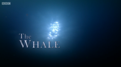 BBC Whale.png