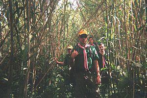 Venturer Scout - Image: Hamrun venture