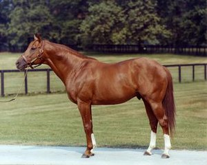Secretariat (horse) - Secretariat as an older stallion
