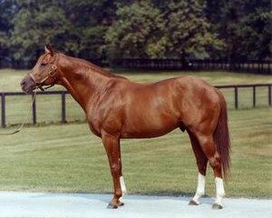 Secretariat (horse) - Secretariat as an older stallion