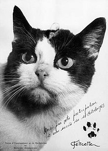 Postcard of Félicette, a black and white cat, with inscription and pawprint