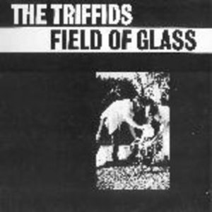 Field of Glass - Image: Field of Glass