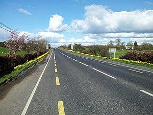 N77 road (Ireland) - Daffodils in full bloom - March 2012