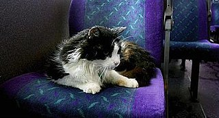 Casper (cat) Cat from Plymouth that commuted by bus