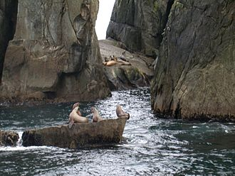 Chiswell Islands - Sea lions on the islands