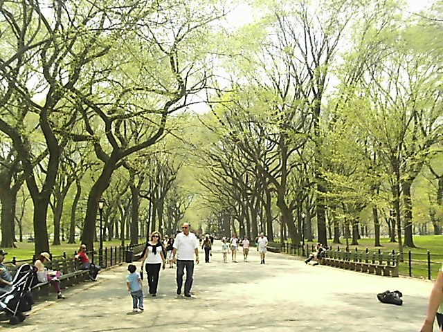 Trees in Central Park, NYC (June 2004)