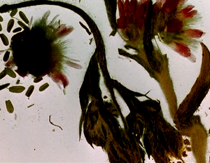 The Garden of Earthly Delights (1981 film) - A screenshot from The Garden of Earthly Delights, showing montane zone vegetation