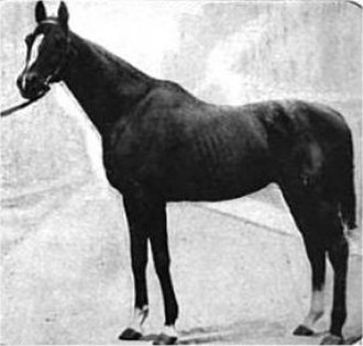 1895 Kentucky Derby - 1895 Kentucky Derby winner Halma, c. 1907