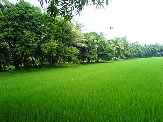 Coastal Andhra - Lush green farms in East Godavari.