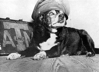 Reveille (dog) - Reveille I