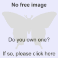 Replace this image butterfly.png
