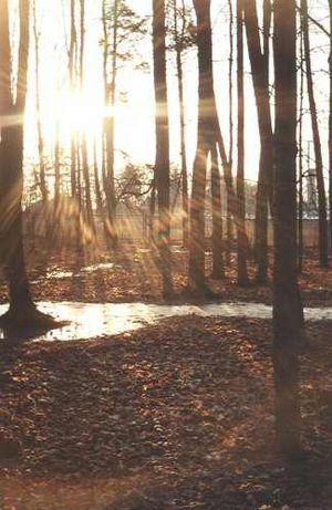 Różanystok - Image: Rozanystok Forest