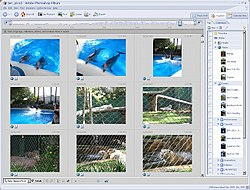 Adobe Photoshop Album screenshot.jpg