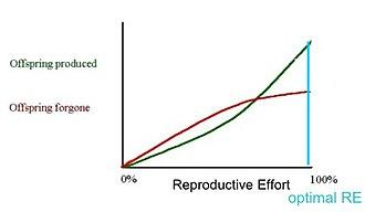 Semelparity and iteroparity - Semelparous reproductive effort