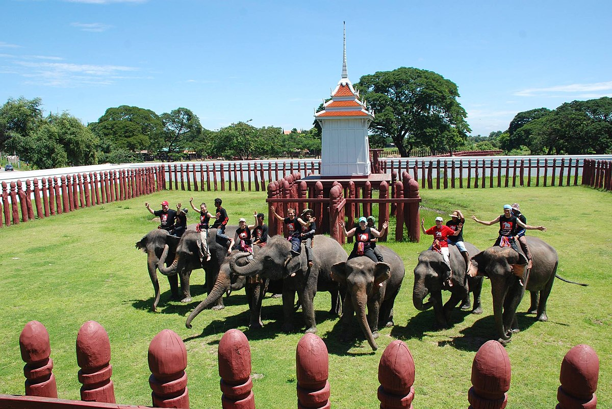 Elephantstay - Wikipedia