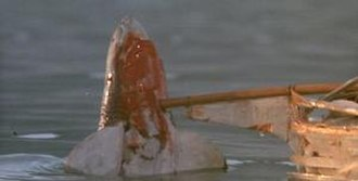 "Jaws: The Revenge - A frame from the sequence where the shark is destroyed, showing the crude shark model. Henry Millar was awarded for ""Worst Visual Effects"" at the 1987 Golden Raspberry Awards."