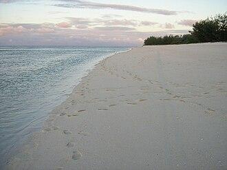 Capricorn and Bunker Group - Masthead Island shoreline