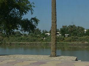 Samawah - The palm groves of Samawah