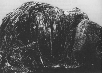 """New Zealand Globster - Photograph of the New Zealand Globster. Source: Greenwell, J.R. (1988). """"Bermuda blob remains unidentified"""". ISC Newsletter 7 (3): 1-6. (Reproduced in Ellis, R. (1994). Monsters of the Sea. Robert Hale, London. p. 316.)"""
