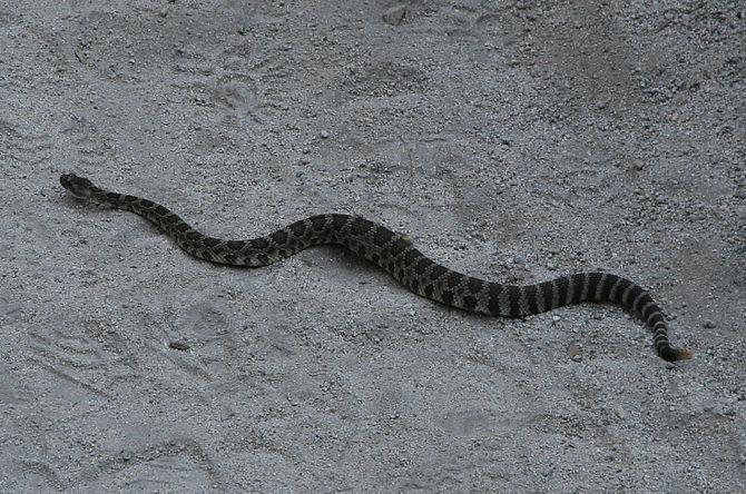 Rattlesnake KingsCanyon