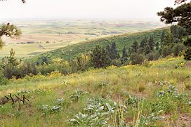 The southern slopes of Kamiak Butte, with wheat fields beyond