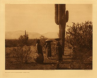 Salt River Pima–Maricopa Indian Community - Maricopa women gathering saguaro fruits, circa 1905