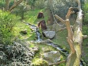 Landscape immersion as on this picture (Wuppertal Zoo, Germany) allows a small impression of natural habitats.
