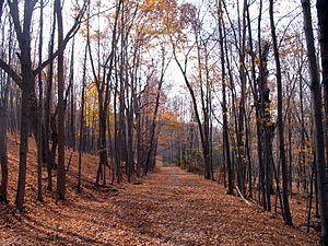 Goosepond Mountain State Park - Image: Gooseond trail
