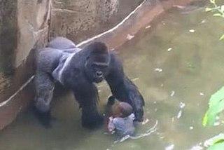 "Killing of Harambe Shooting of captive gorilla ""Harambe"" holding a boy that climbed into its enclosure"