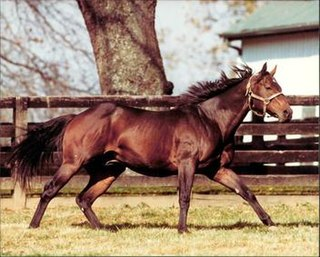 Foolish Pleasure American-bred Thoroughbred racehorse