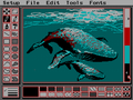 CGA program interface.png PCPaint in 320×200 3rd palette low intensity, showing a typical low resolution interface. Note the use of dithering to overcome the CGA palette limitations.