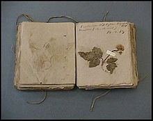 Eaton's Herbarium, published in 1830, including one hundred and eleven specimens labeled in his handwriting.