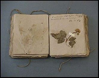 Amos Eaton - Eaton's Herbarium, published in 1830, includes one hundred eleven specimens labeled in his handwriting.