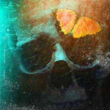 A skull can be seen with a butterfly on it.