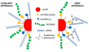 Colloidal gold - Multifunctional siRNA-gold nanoparticles with several biomolecules: PEG, cell penetration and cell adhesion peptides and siRNA. Two different approaches were employed to conjugate the siRNA to the gold nanoparticle: (1) Covalent approach: use of thiolated siRNA for gold-thiol binding to the nanoparticle; (2) Ionic approach: interaction of the negatively charged siRNA to the modified surface of the AuNP through ionic interactions.