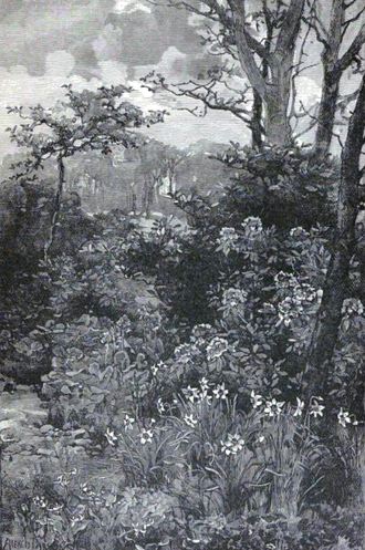 """William Robinson (gardener) - """"Colonies of Poet's Narcissus and Broad Leaved Saxifrage"""" from The Wild Garden, illustration by Alfred Parsons."""