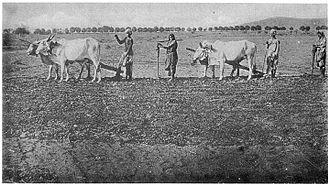Kurmi - Image: Kurmi sowing