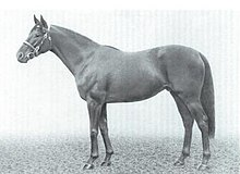 photo of Nagle's racehorse, Sandsprite