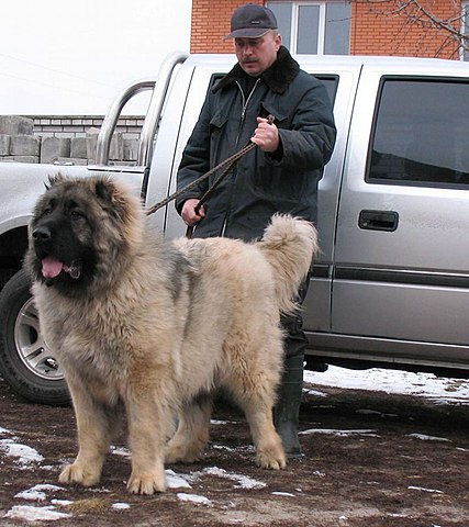Russian Prison Dogs Puppies