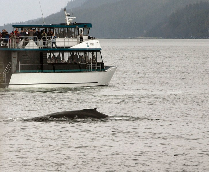 File:Whale Watchers in Juneau.jpg